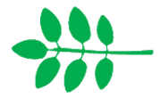 Leaf morphology Odd pinnate