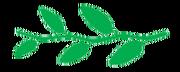 Leaf morphology Alternate
