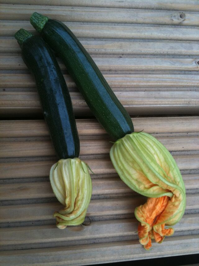 File:Zucchini Courgette Fruit Flowers.jpg