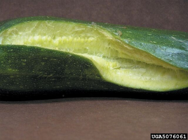 File:Cucumber Split Fruit.jpg
