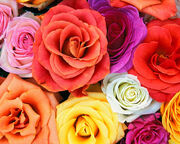 Flowers-wallpapers-love-blooms-roses-bunch-of-flowers