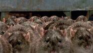 Lil' RATS!!!