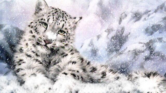 File:Snow-leopard-light-96557.jpg
