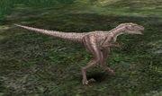 Hill Velociraptor (lvl 89)