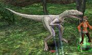 Elite Hill Velociraptor (lvl 89)