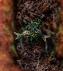 Rune of Heal