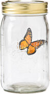 Butterfly Collection-Monarch