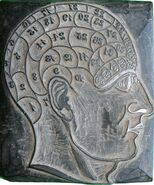 Wooden Head used for Phrenology by George Burgess