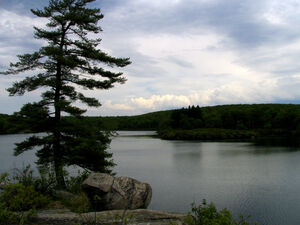 Pine Meadow Lake