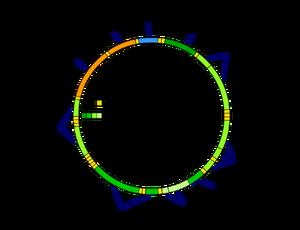 Mitochondrial DNA de