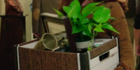 Erin's Plant in a Box