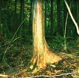 File:Aokigahara.noose -710x437.jpg