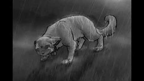 Warriors-Bluestar~Stand In The Rain