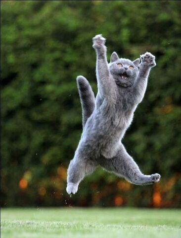 File:Jumping-cats22 (1).jpg