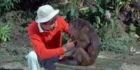 Gilligan's Monkey