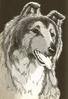 Lassie5