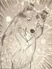 Lassie14