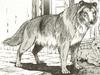 Lassie11
