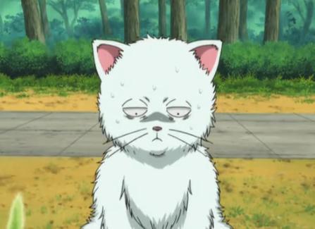Plik:Gin cat.jpg