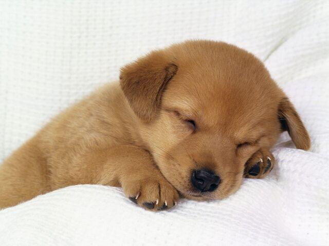 File:Cute-little-puppy-wallpaper.jpg
