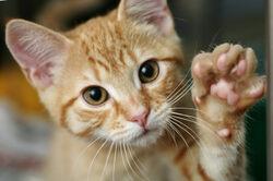 Catspaw-1-