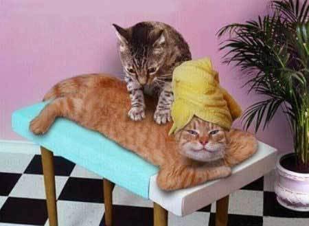 File:Cat-massage.jpg