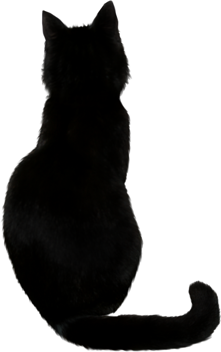 Cat With Back Tail Way