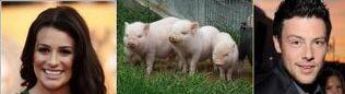 Pigs finchel 2