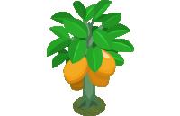 Kumquat Bush (200)