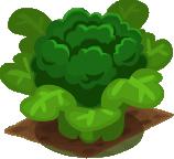 Crop Broccoli