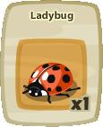 Inv Ladybug