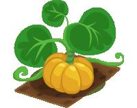 Crop Pumpkin (200)