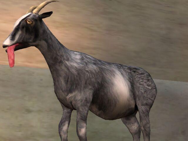 File:Normal Goat.jpg