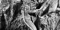 Two-Legged Lizard