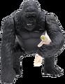 Kong holdin Ann 2005