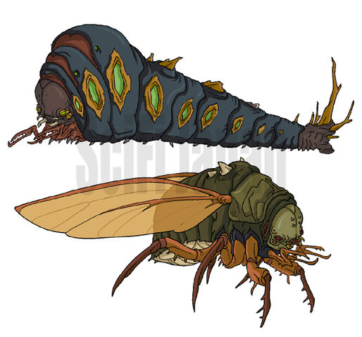 File:Megapede and Cicada.jpg