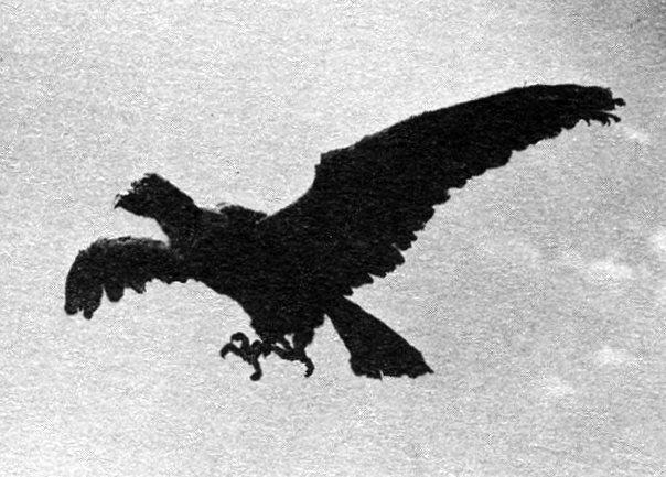 File:Condor001.jpg