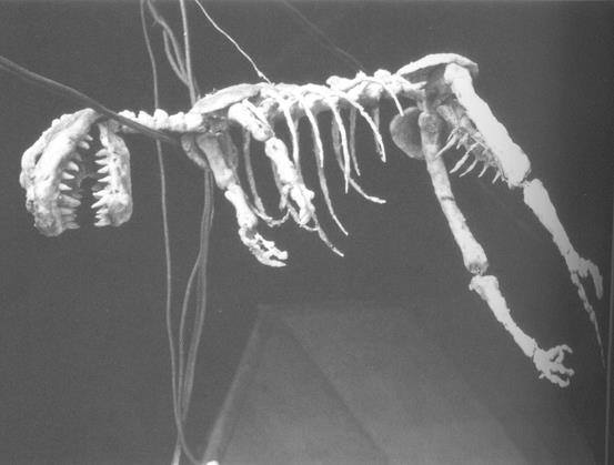 File:G54 - Skeleton prop used at the end of the film.jpg