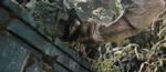 Venatosaurus5
