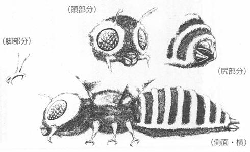 File:Concept Art - Godzilla vs. Mothra - Mothra Imago 3.png