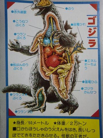 File:Godzilla Kabou Zukan Anatomy.jpg