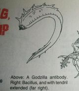Godzilla Antibody