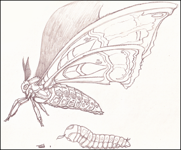 File:Legendary mothra by isaacbarnett-d7stv5o.png