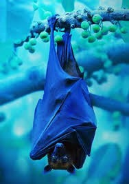 File:Blue bat.jpg