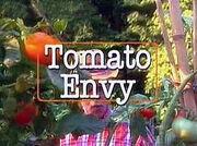 Tomato Envy