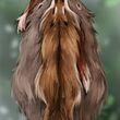 Northern Fur