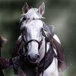 Robb Stark's Horse