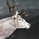 Winter Hart