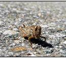 Grasshopper Wiki