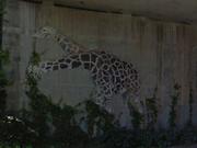 Fidrardif-Giraphics